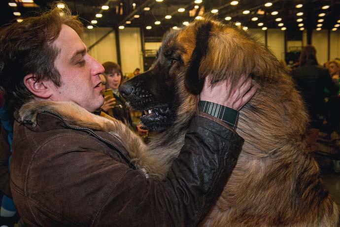 фото собак разных пород - фото большой собаки: Леонбергер