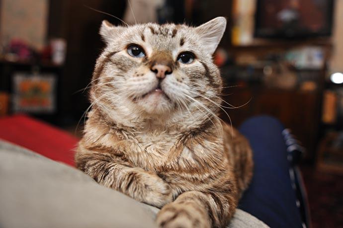 Мой кот - Мартин