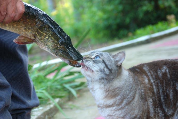 Кот и щука