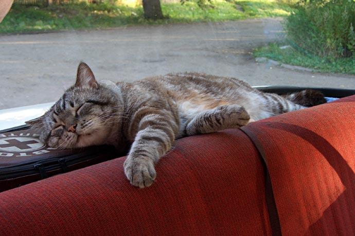 Кот спит на аптечке