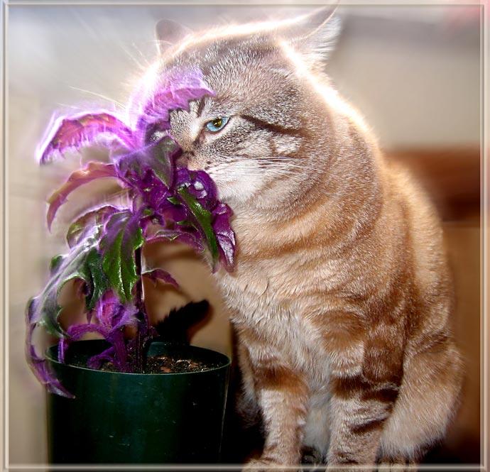Кот-светлячок