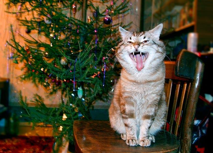 Новогодние песни кота