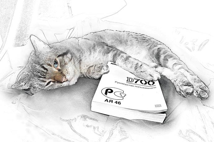 Кот фотограф