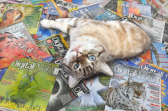 Кот фотограф на журналах