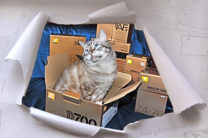Кот в коробке от фотокамеры Nikon D700